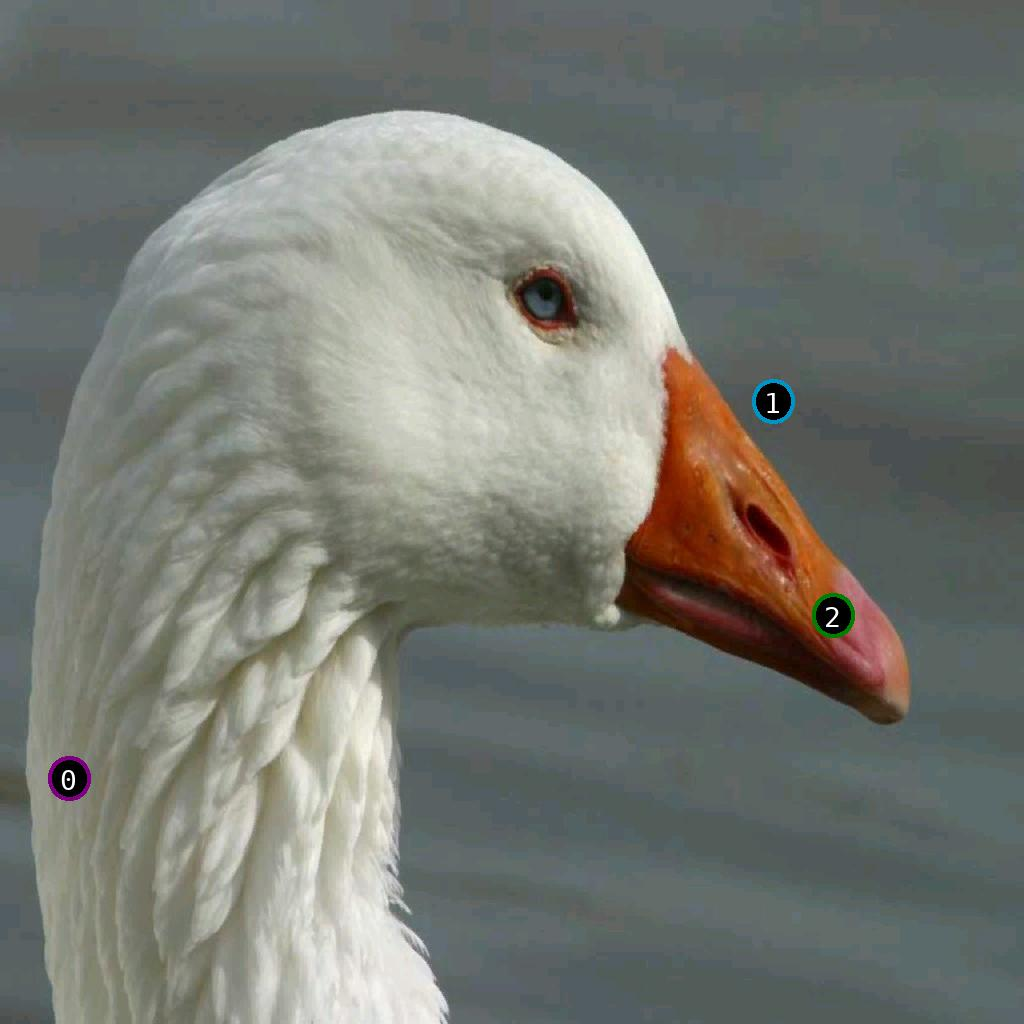 sat pic of duck